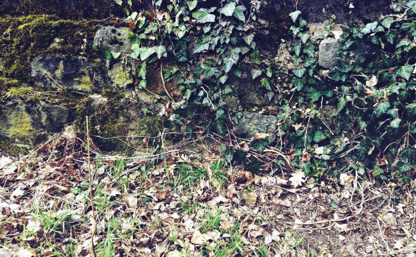 Wald-Blogbuster-Hundeseele